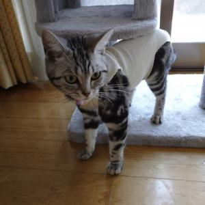 猫ちゃんの避妊手術(事務所の独り言)