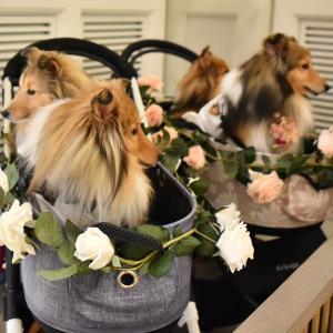 京都へ結婚式に参列の旅 ~ チャペルで挙式を見守る ~