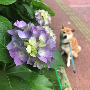 今日の元気(6月)