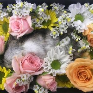 ジェリーのお葬式