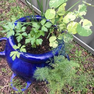 (悲報)虫除けだと思って除草剤を撒いてオーガニック野菜を枯らした件。SBSラジオ!