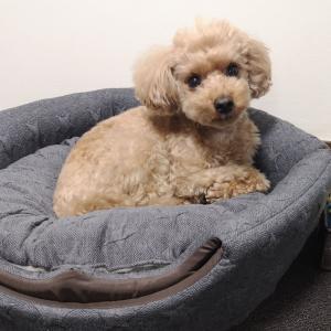 犬の寝床作り