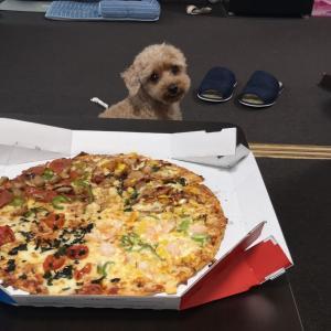 ピザが大好物のポッチャマ