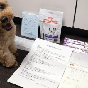 犬の嘔吐&胃炎で動物病院へ