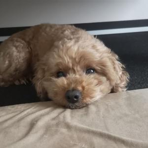イヌ枕。可愛く顔乗せてます!