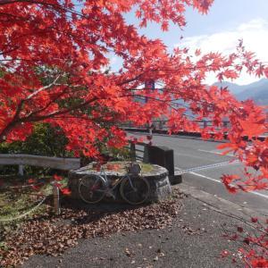香落渓の紅葉ポタ