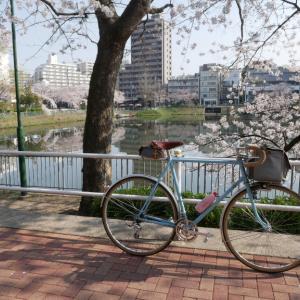 近所の桜ポタ☆