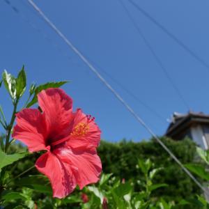 夏のおさんぽ