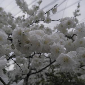 春のおさんぽ(2)