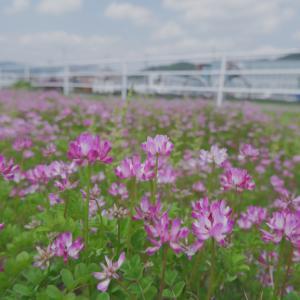 春のおさんぽ(4)