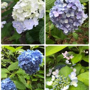 お花に癒される時間