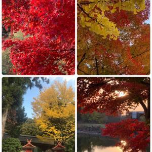 色鮮やかな紅葉に囲まれて…
