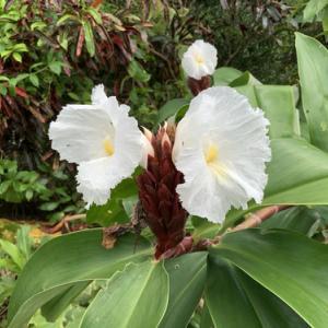 艶かしい花