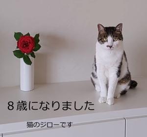 我が家の猫ジロー