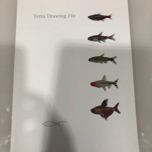 Loricaria Drawing File