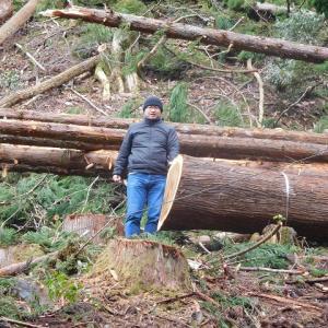 山から木をおろす