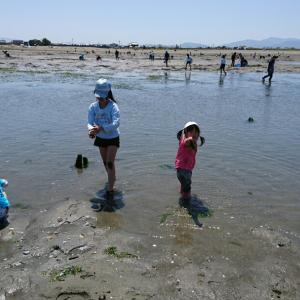 松名瀬海岸で潮干狩り