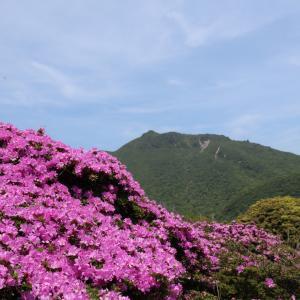 まずは鳴子山のミヤマキリシマ