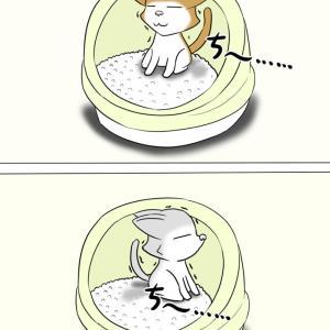 ほのぼの・猫の日常4コマ漫画「ミーのおもちゃ箱」その1380