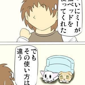 猫ベッドの使い方