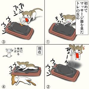 子猫とマッサージ器