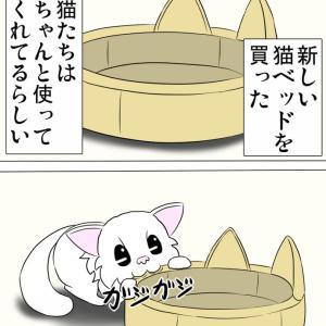 猫ベッドを使う猫達