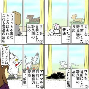 外猫たちの反応