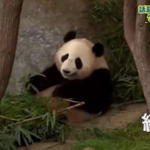 【NHK】和田政宗議員「6月4日は天安門事件31年。NHK総合テレビでは『かわいすぎ!?話題のパンダ大集合』が放送されている」