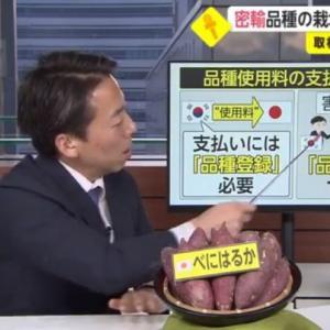 「日の丸サツマイモ」韓国で人気 日本から密輸 無断で栽培 シャインマスカットで中国もボロ儲け 現状打つ手なし