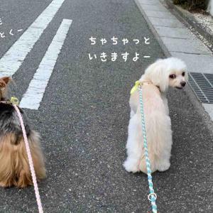夏場のお散歩めやす