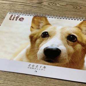 O次郎カレンダー作ってみました
