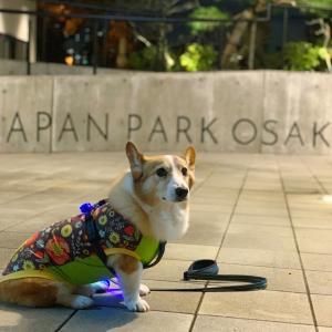 大阪城へ夜さんぽ
