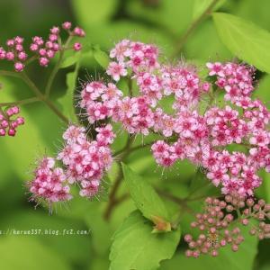 久屋大通庭園フラリエの花