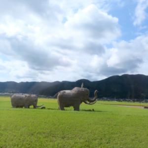 愛媛県松山市に方向音痴が行く&留守番ポメラニアン