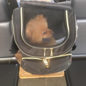 ペット同伴・犬連れで新幹線のぞみに乗る