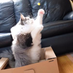 可愛い猫と遊んでて見たくなかったモノ