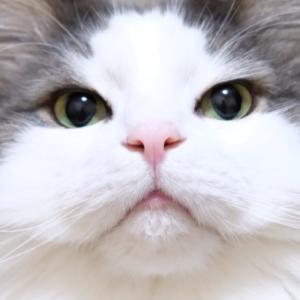 可愛い猫が居る場所に不思議そうなポメラニアン