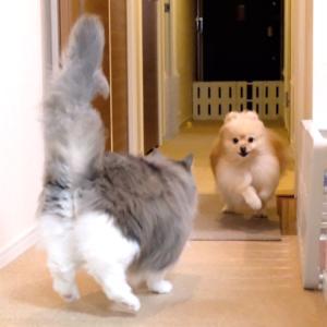 犬と遊びたくて駆け寄る猫
