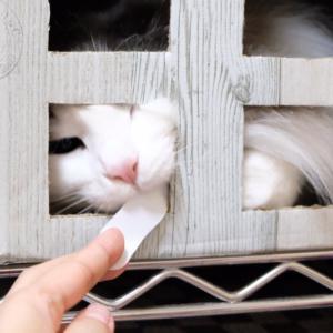 お目覚めポメラニアンと可愛い猫の釣り方