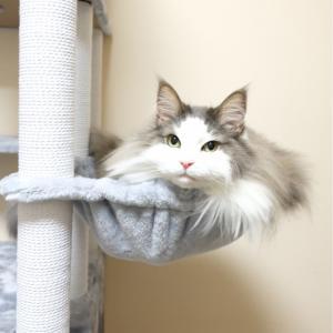 新しいキャットタワーのハンモックで寛ぐ大型猫
