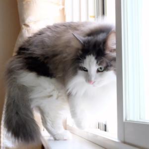 術後、足がまだ完全ではない猫の為に用意したのに