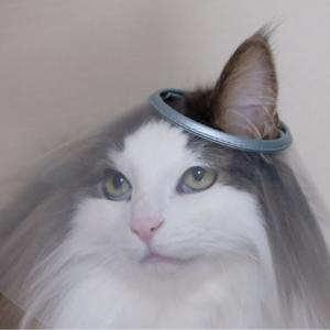 笑ってはいけない猫の看病24時