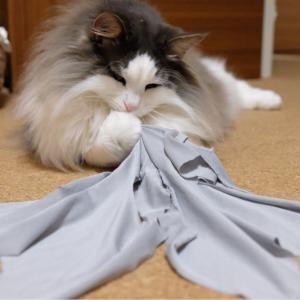 UNIQLOのエアリズムで猫の術後服を作る