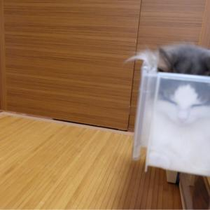 【5】邪魔する以外の仕事もこなす優秀な猫