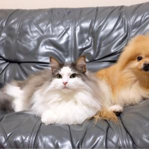 留守中の犬猫、熱中症対策 停電対策