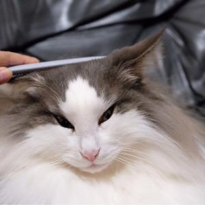 猫が無になる【ねこじゃすり】