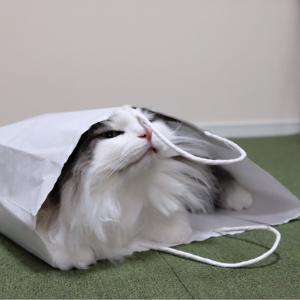 行方不明の猫を探すポメラニアン