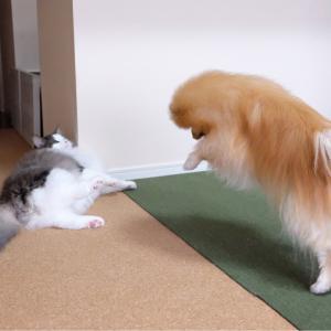 秒でヤル気スイッチが切れた猫