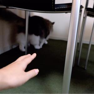 100%猫に嫌われるけど止められない事