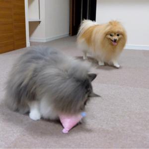 ジャイアンポメラニアンとのび太猫